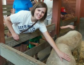 sheep petting