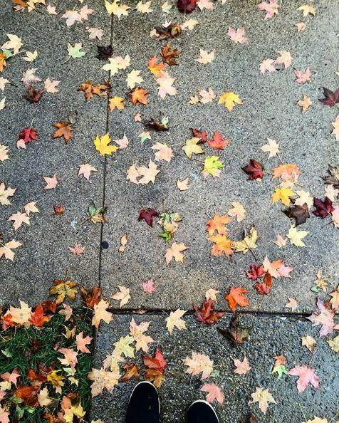 fall leaves