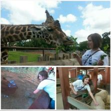 collage zoo