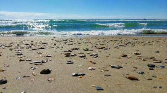 Ocean and shells