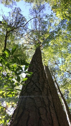 Woods--tree